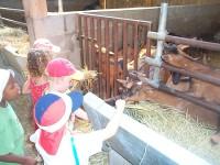 visite de la chèvrerie petit perche romilly du perche