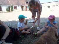 visite de la chèvrerie petit perche loir et cher