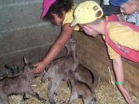 visite de la chèvrerie petit perche romilly