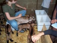 visite de la chèvrerie petit perche groupes