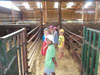 visite de la chèvrerie petit perche groupe enfants adultes